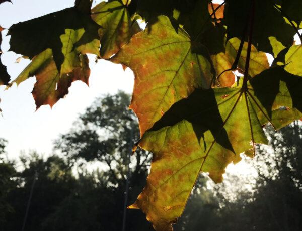 a green-orange leaf
