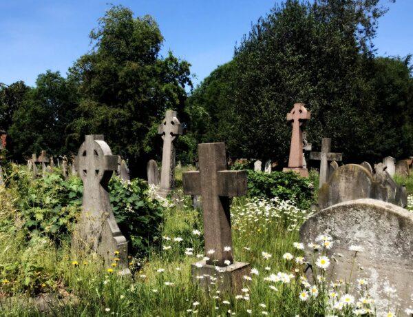 an overgrown graveyard on a sunny day