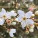 spring blessing blossom